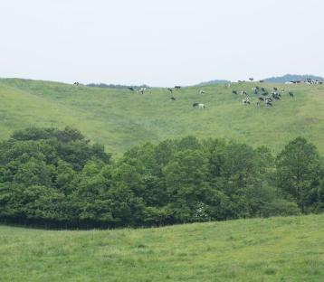 大野の景色
